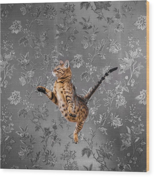 Bengal Cat Jumping Wood Print