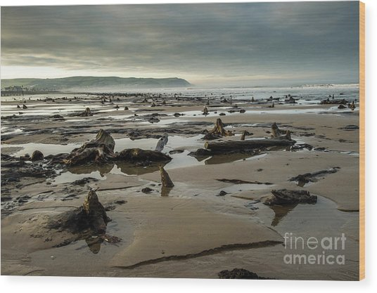 Bronze Age Sunken Forest At Borth On The West Wales Coast Uk Wood Print