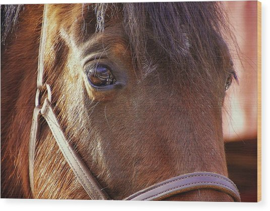Morgan Horse Wood Print by JAMART Photography