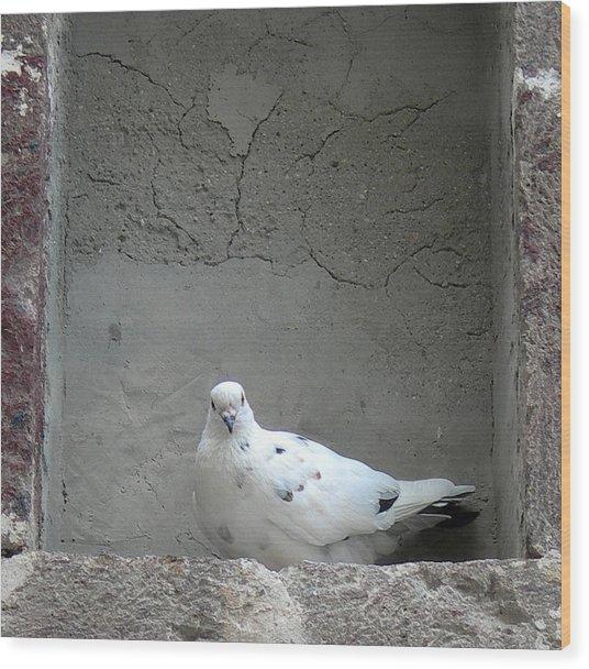 Peace Dove Wood Print