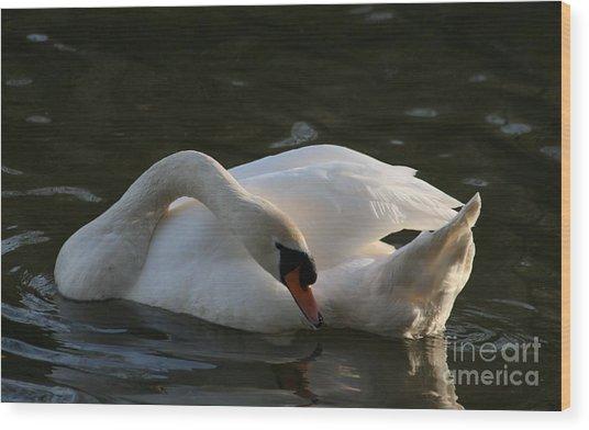 Swan Lake Story Wood Print by Valia Bradshaw