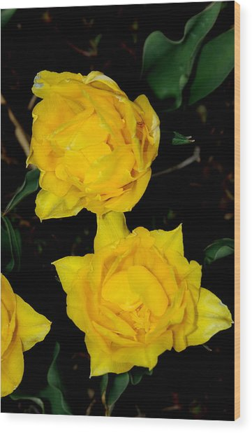 Yellow Flowers Wood Print by Patrick  Short