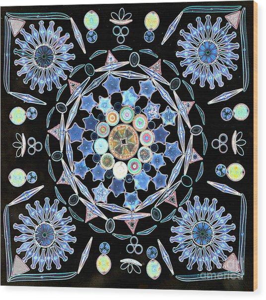 Diatoms Wood Print