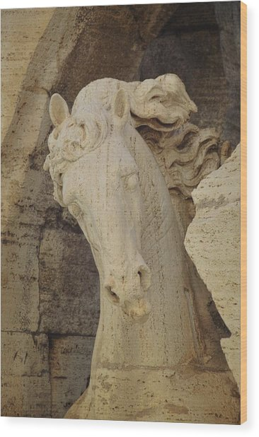 Navona Steed Wood Print by JAMART Photography