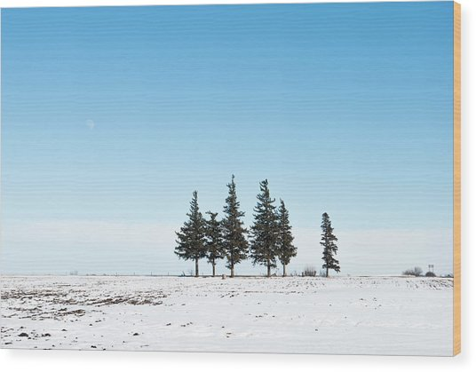 6 Pines And The Moon Wood Print