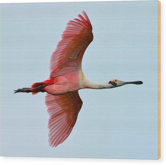 Roseate Spoonbill In Flight Wood Print by Lindy Pollard