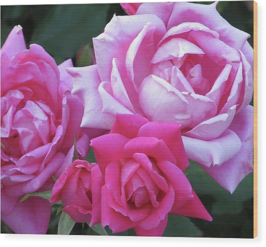 Roses Wood Print by Michele Caporaso