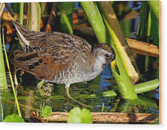 Sora Rail Wood Print