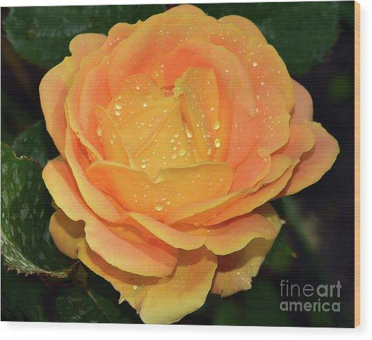 Beautiful Rose Wood Print
