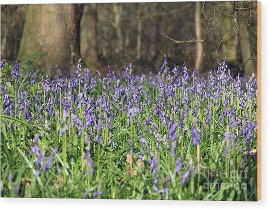 Bluebells At Banstead Wood Surrey Uk Wood Print