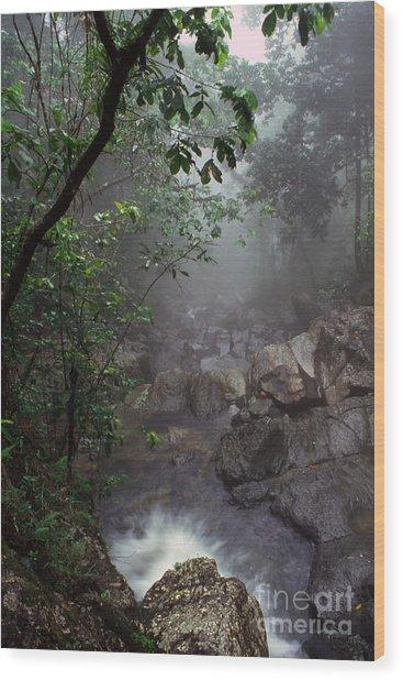 Misty Rainforest El Yunque Wood Print