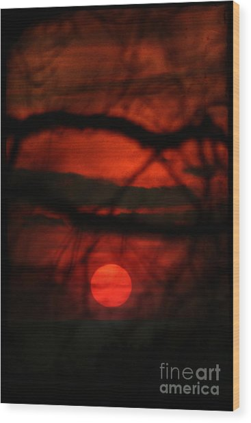 The Sunset Wood Print by Angel Ciesniarska