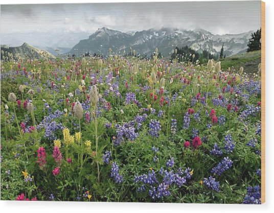 Wildflower Meadow Wood Print by Bob Gibbons
