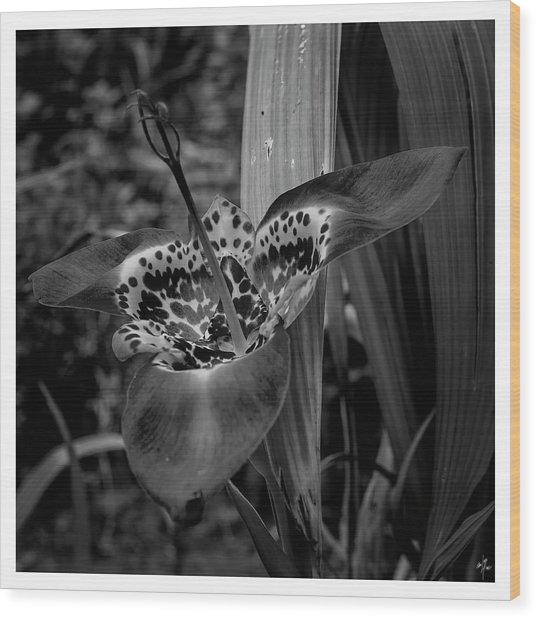 7903 Wood Print