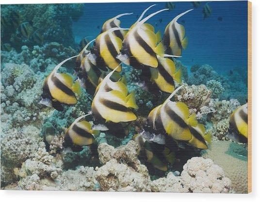 Red Sea Bannerfish Wood Print by Georgette Douwma