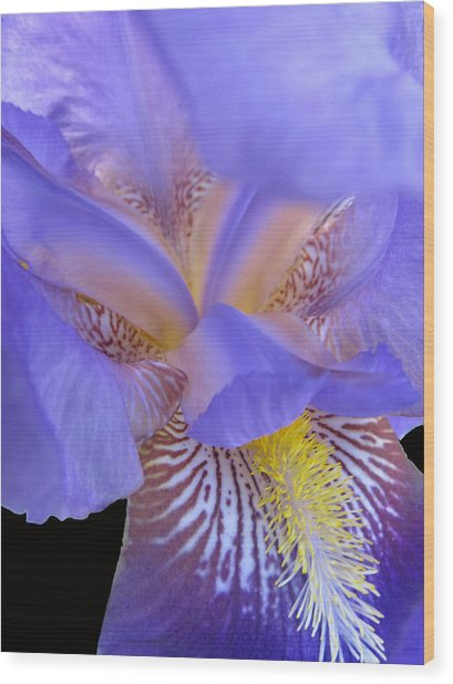 Iris Wood Print by Michele Caporaso