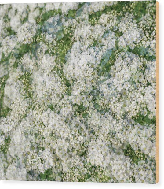 Spring Season - Inspired By Jackson Pollock Wood Print