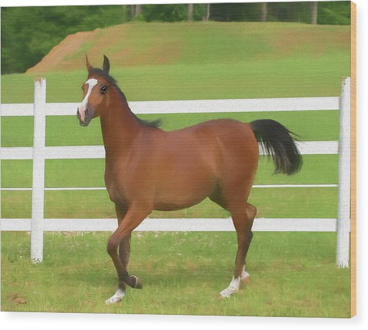 A Beautiful Arabian Filly In The Pasture. Wood Print