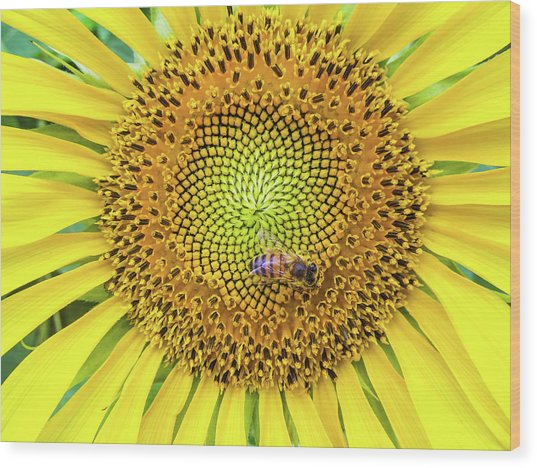 A Bee On A Sunflower Wood Print