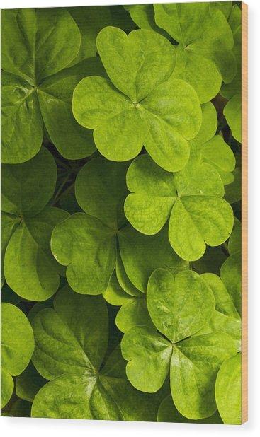 A Bit Of Green Wood Print