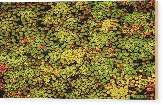 A Botanical Mosaic Wood Print