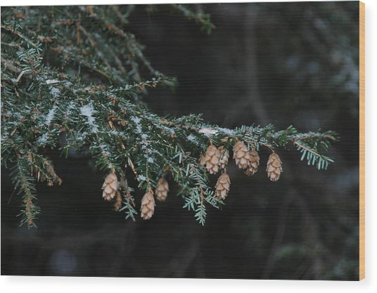 A Branch's Treasure Wood Print by See Me Beautiful Photography