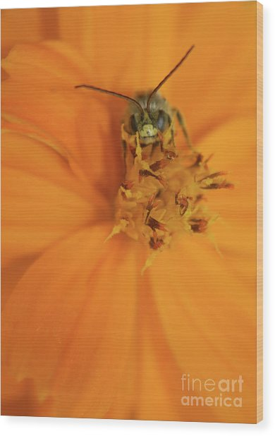 A Bugs Life Wood Print