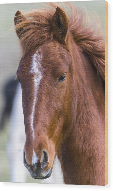 A Chestnut Horse Portrait Wood Print