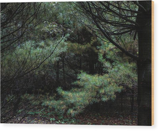 A Clearing In The Wild Wood Print