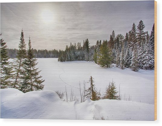 A Cold Algonquin Winters Days  Wood Print