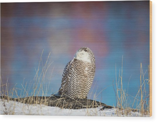 A Colorful Snowy Owl Wood Print