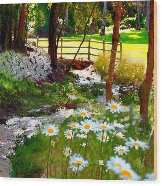 A Country Stream With Wild Daisies Wood Print