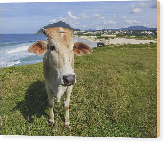 A Cow At The Beach Wood Print