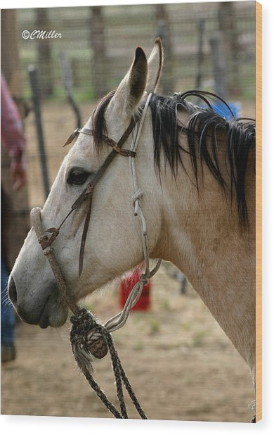 A Cowboys Partner.. Wood Print by Carol Miller