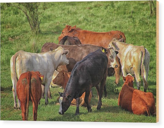 A Cows Backside Wood Print