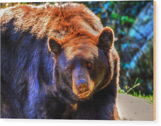 A Curious Black Bear Wood Print