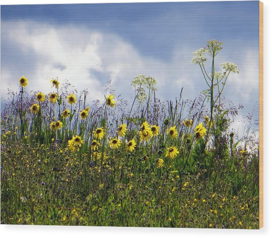 Wood Print featuring the photograph A Daisy Day by Karen Shackles