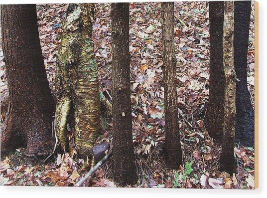 A Dapper Birth In The Midst Of Hemlocks Wood Print by Terrance DePietro