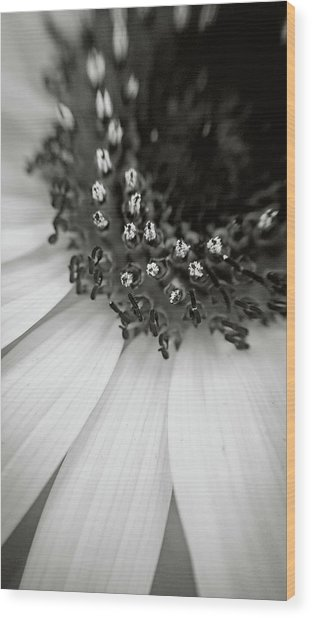 A Deeper Look Wood Print