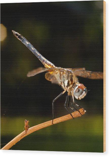A Dragonfly Wood Print