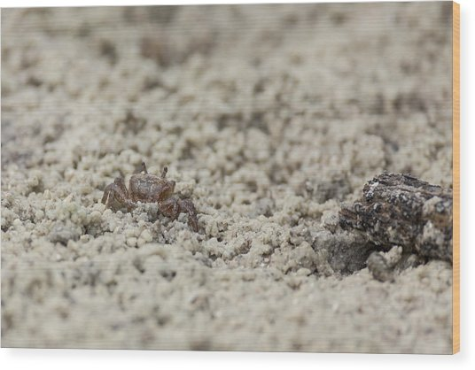 A Fiddler Crab In The Sand Wood Print