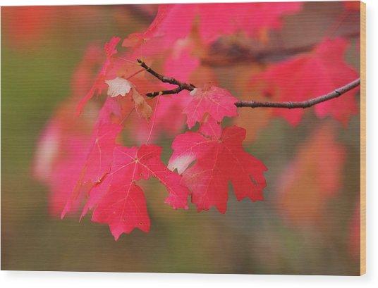 A Flash Of Autumn Wood Print