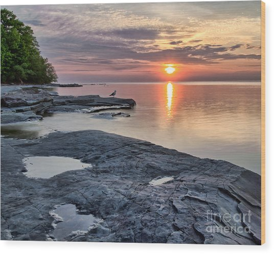 A Flat Rock Sunset With Seagull Wood Print