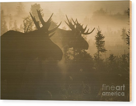 A Foggy Morning Wood Print by Tim Grams