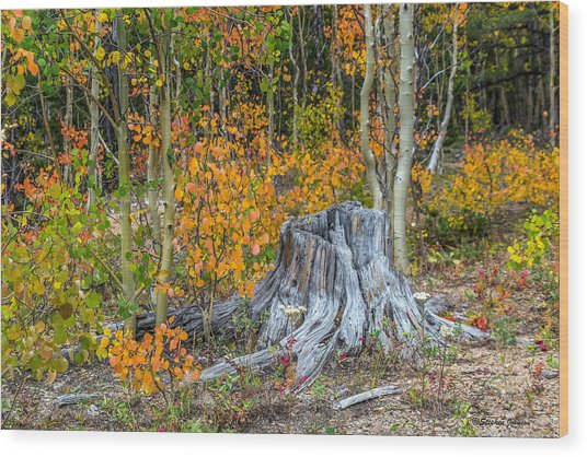 A Forest Of Color Wood Print