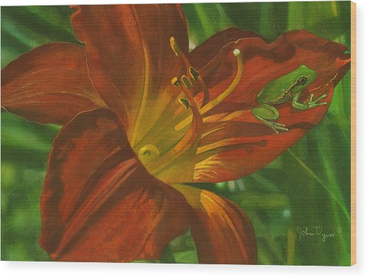 A Frog On A Lily Wood Print
