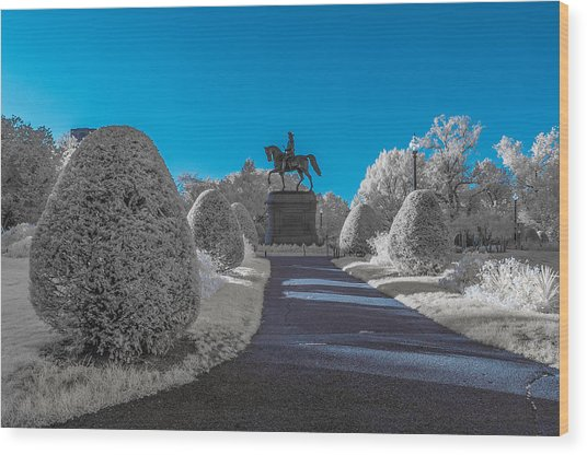 A Frosted Boston Public Garden Wood Print
