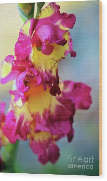 A Gladiolus 3 Wood Print