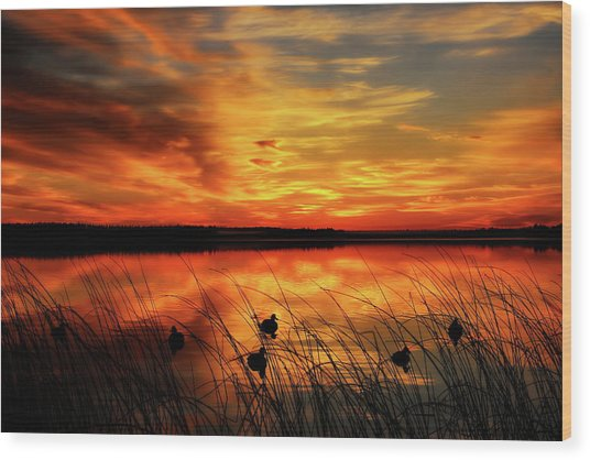 A Golden Sunrise Duck Hunt Wood Print
