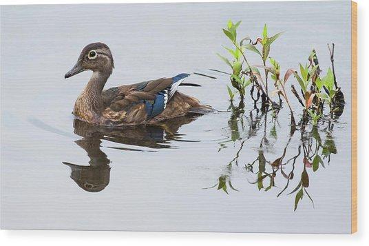 A Graceful Swim Wood Print